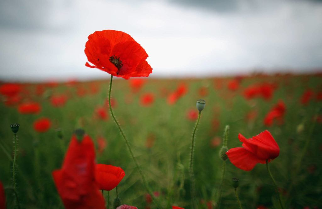 Courage Remembered Remembrance Day Past And Present Victoria News