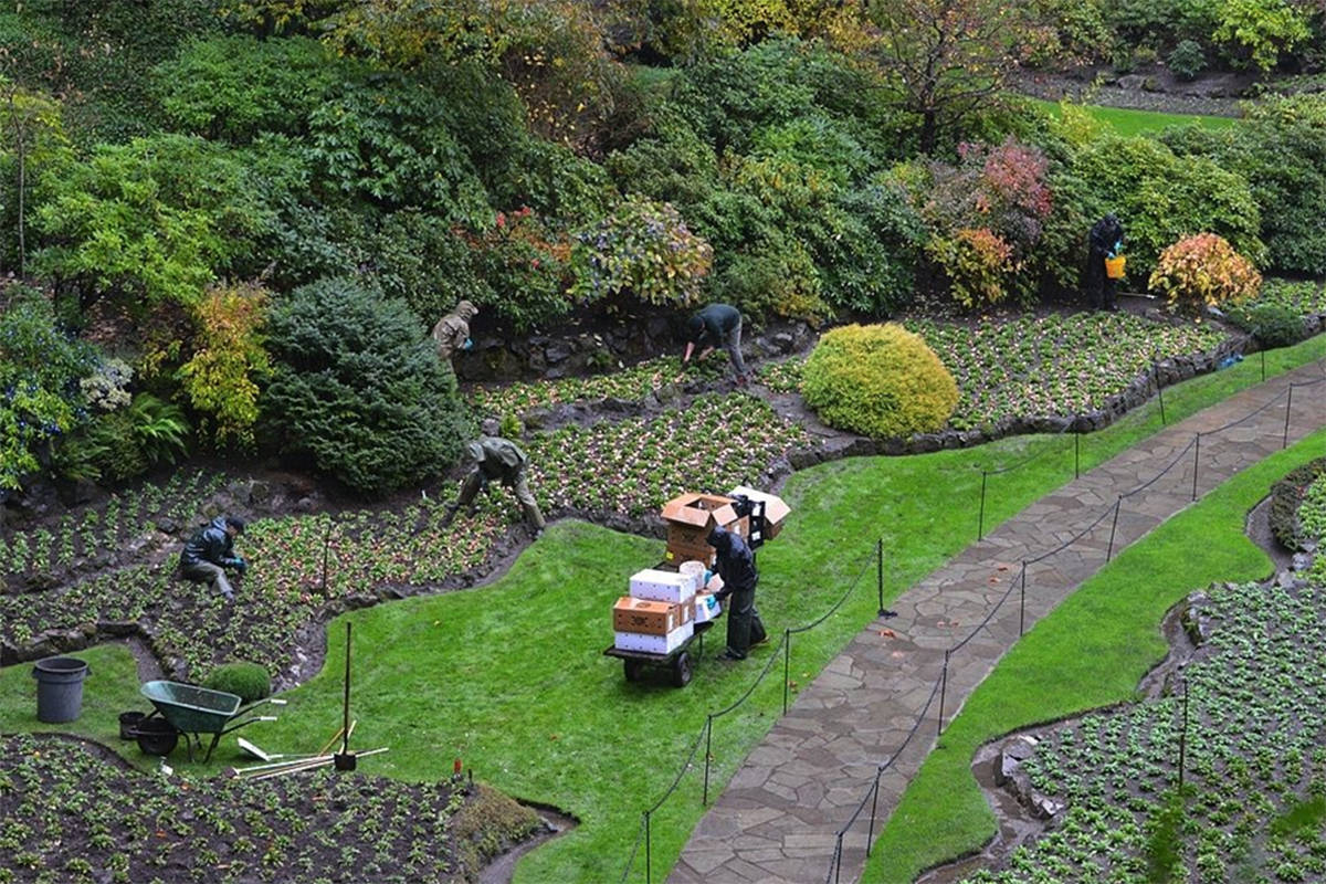 Bustling Time For Butchart Gardens As Winter Nears Victoria News