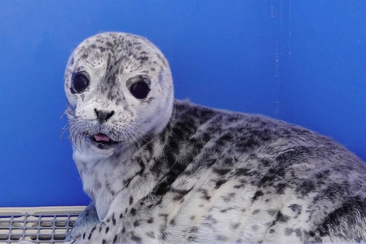 Seal with is now who Who is