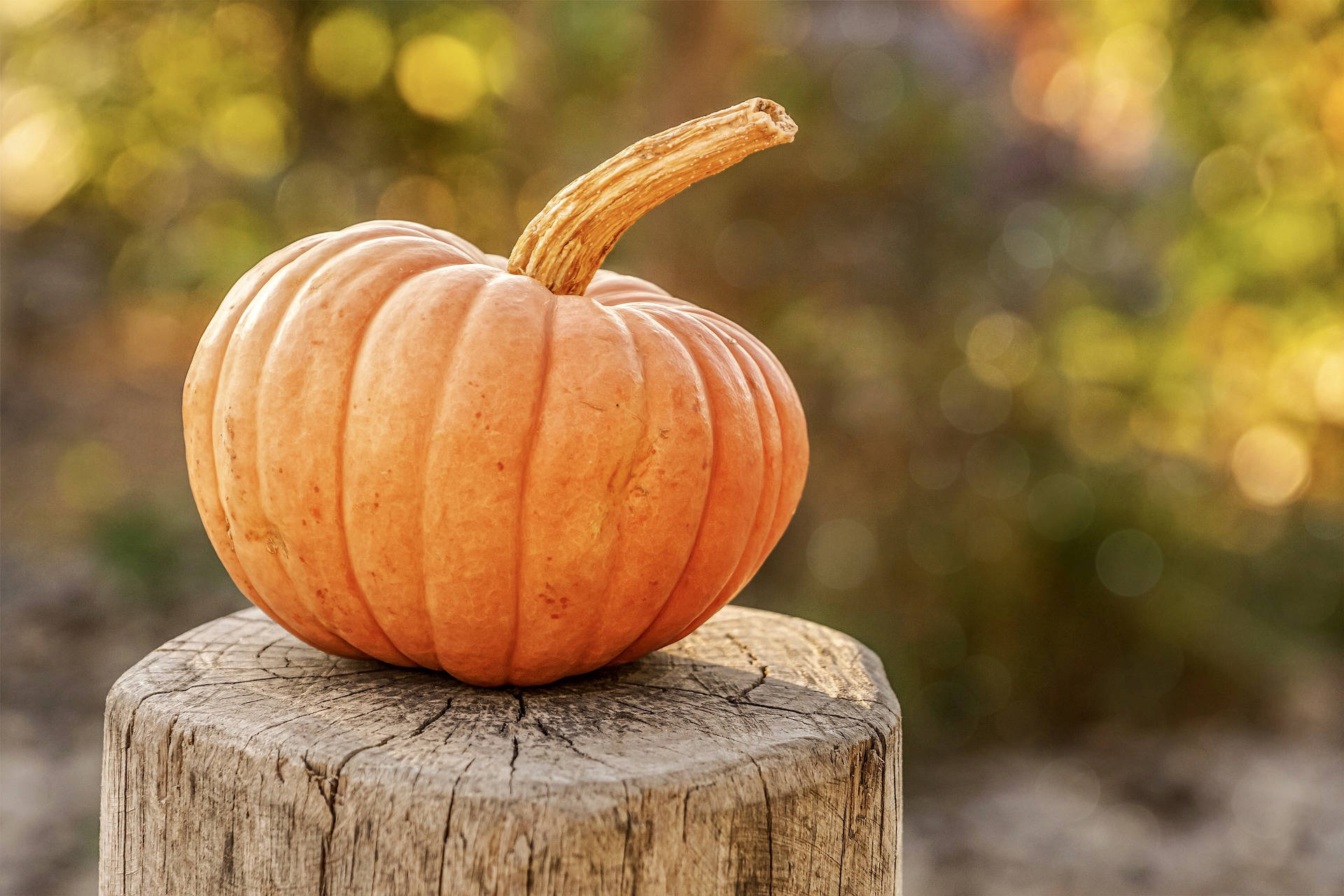 Where to buy your last-second pumpkins in Greater Victoria – Victoria News