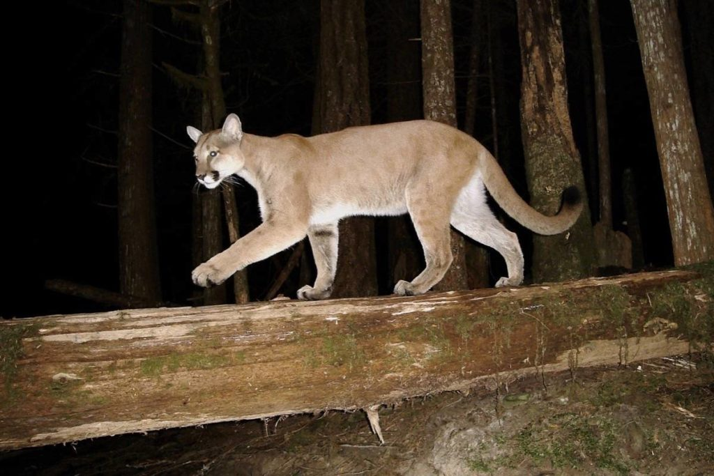 Sooke workshop shows you how to discover animal signs in the forest - Victoria News