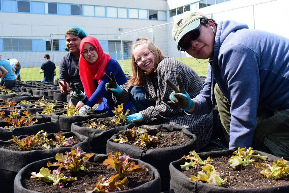 Greater Victoria students help bring small-scale urban farming to community